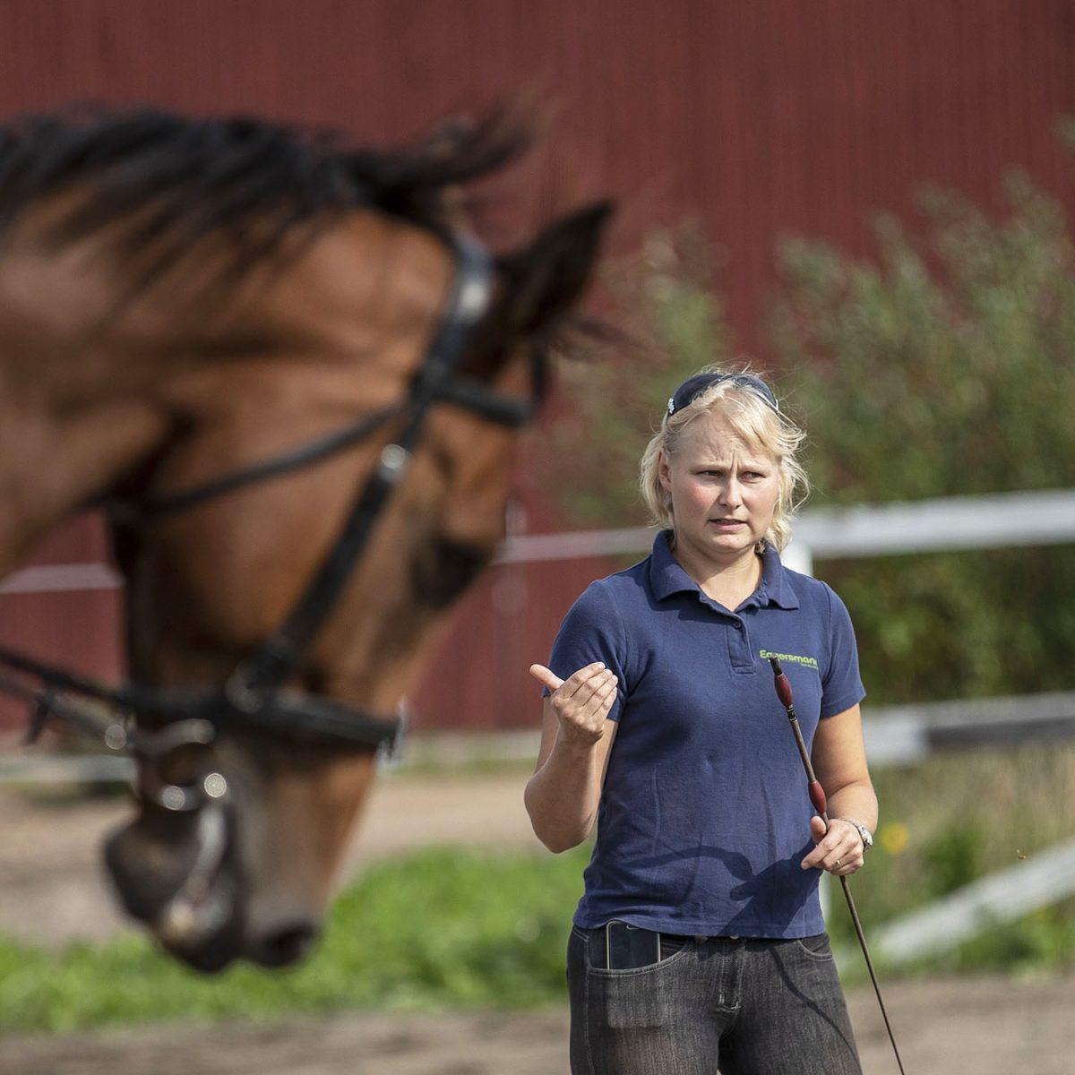Hevosalan epäkohdat: Sairaana töissä seitsemän euron palkalla