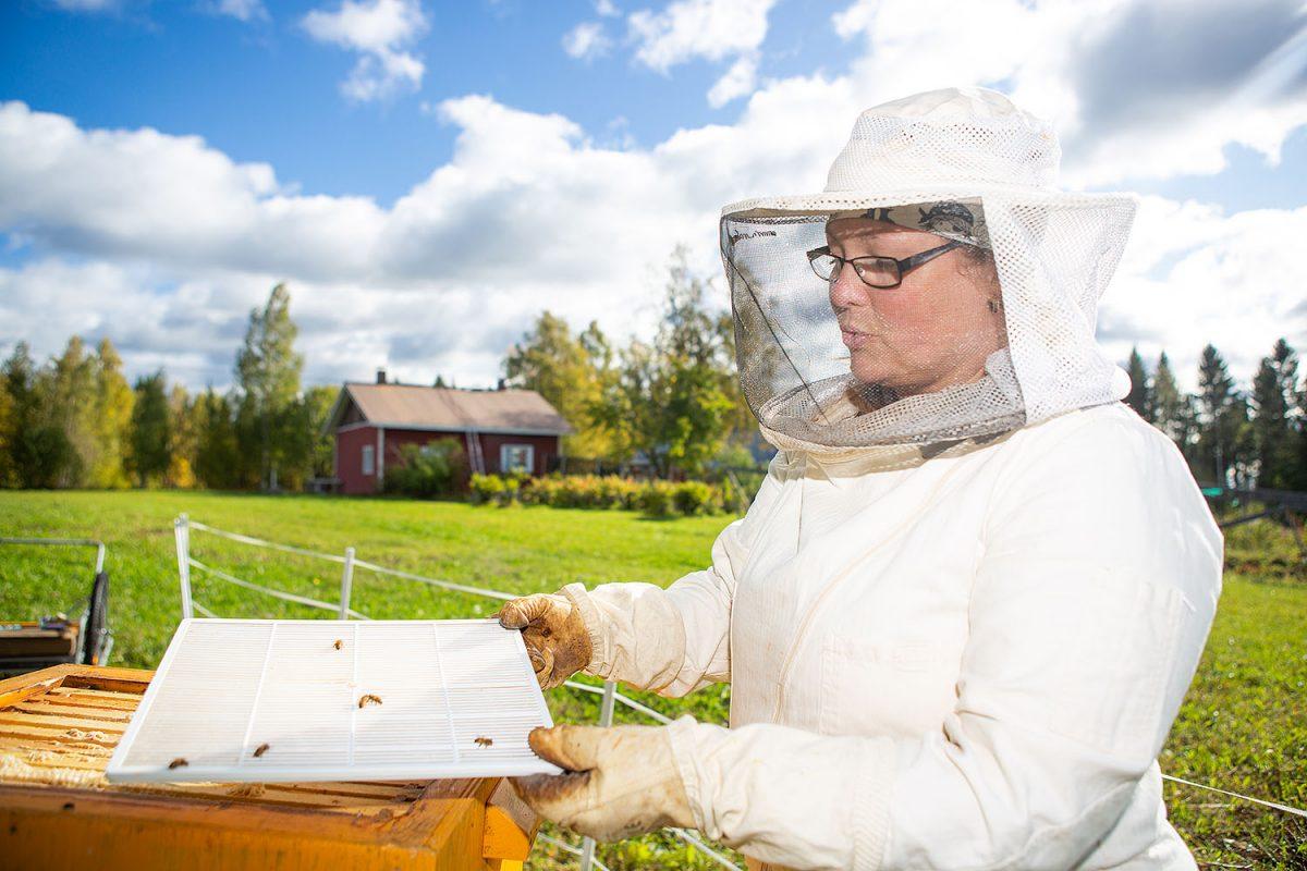 """HARRASTAJA: Kirsi Oinonen: """"Mehiläisten hoitaminen on minun juttuni"""""""
